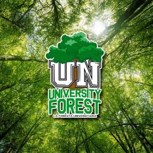 cover - La foresta universitaria