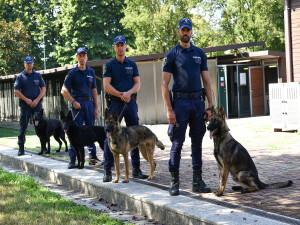 Cani Polizia locale